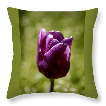 Purple Tulip Throw Pillow by Donna Stiffler