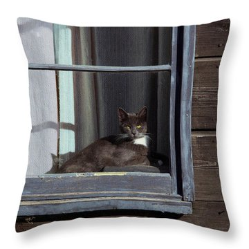 Purrfect Throw Pillow by Kathy Bassett