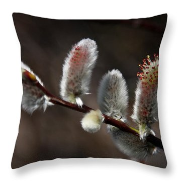Pussy Willows Throw Pillow by John Haldane