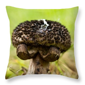 Put 'em Up Throw Pillow by Shane Holsclaw
