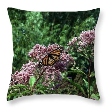 Pye Fly Throw Pillow