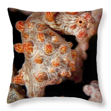 Pygmy Seahorse On Sea Fan, Lembeh Throw Pillow by Steve Jones
