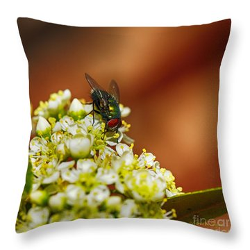 Pyracantha And Fly Throw Pillow by Karen Slagle