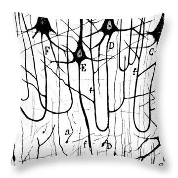 Pyramidal Cells Illustrated By Cajal Throw Pillow