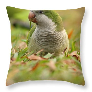 Quaker Parrot #3 Throw Pillow