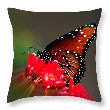 Queen Butterfly II Throw Pillow