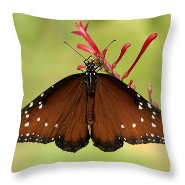 Throw Pillow featuring the photograph Queen Butterfly by Meg Rousher