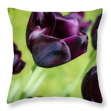 Queen Of The Night Black Tulips Throw Pillow by Peta Thames