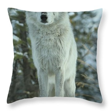 Queen Of The West Throw Pillow by Adam Jewell