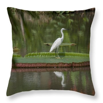 Queen Victoria Water Lily Pad With Little Egret Dthb1618 Throw Pillow