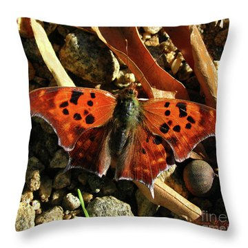 Throw Pillow featuring the photograph Question Mark Butterfly by Donna Brown