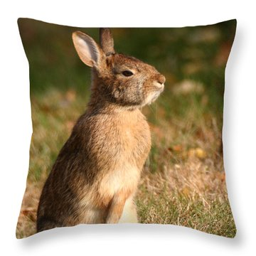 Throw Pillow featuring the photograph Rabbit Standing In The Sun by William Selander