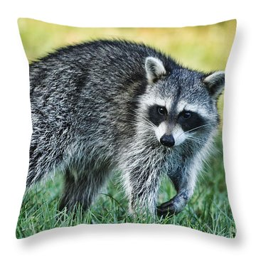 Raccoon Buddy Throw Pillow