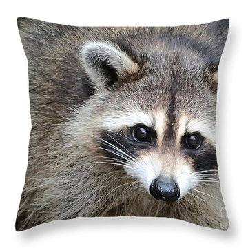 Raccoon Eyes Throw Pillow