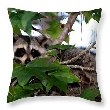 Raccoon Eyes Throw Pillow
