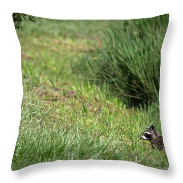 Raccoon In The Wild Throw Pillow