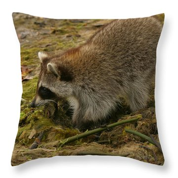 Raccoon Throw Pillow by Mark Russell