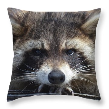 Raccoon -p Throw Pillow