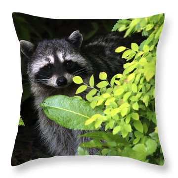 Raccoon Peek-a-boo Throw Pillow by Sharon Talson