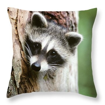 Raccoon Sticking Its Head Out Of A Tree Throw Pillow