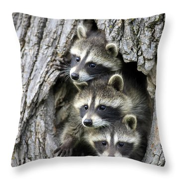 Raccoon Trio At Den Minnesota Throw Pillow