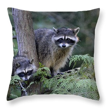 Raccoons In Stanley Park Throw Pillow by Maria Angelica Maira