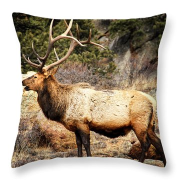 Rack Of Elk Throw Pillow