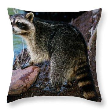 Racoon On Rocks Throw Pillow