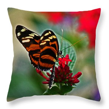 Radiant Butterfly Throw Pillow