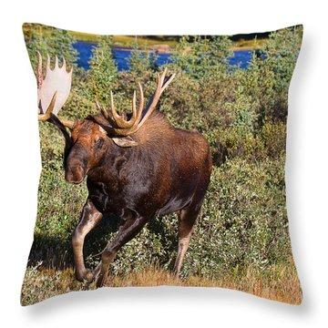 Charging Bull Throw Pillow