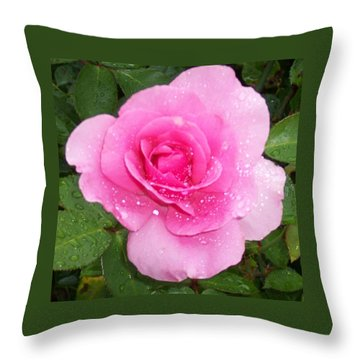 Rain Kissed Rose Throw Pillow by Catherine Gagne