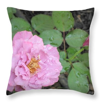 Rain Kissed Rose Throw Pillow