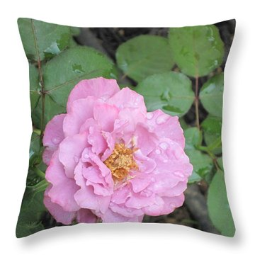 Rain Kissed Rose Throw Pillow