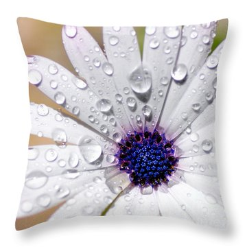 Rain Soaked Daisy Throw Pillow by Kaye Menner