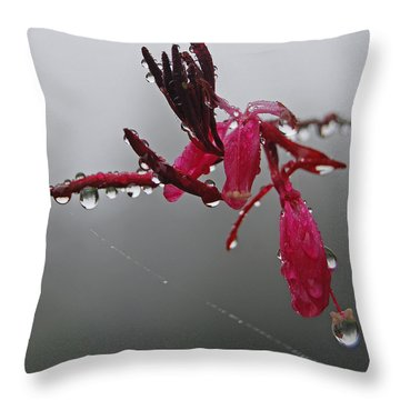 Throw Pillow featuring the photograph Rain Weaver by Jani Freimann