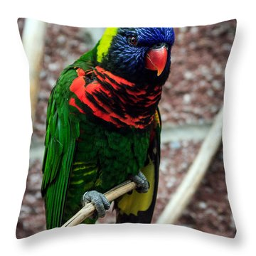 Throw Pillow featuring the photograph Rainbow Lory Too by Sennie Pierson