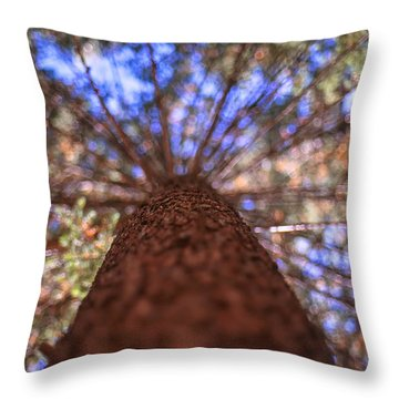 Throw Pillow featuring the photograph Rainbow Pine by Aaron Aldrich