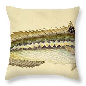 Rainbow Wrasse Throw Pillow by E Donovan and FC and J Rivington