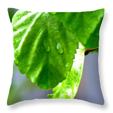 Throw Pillow featuring the photograph Raindrop On Roses by Cathy Shiflett