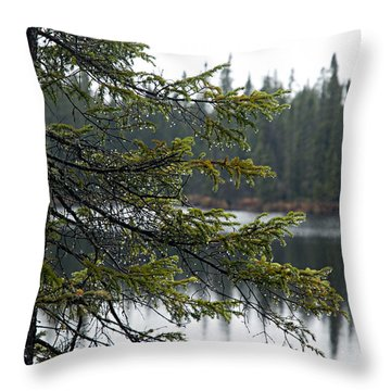 Raindrops On An Evergreen Throw Pillow by Larry Ricker