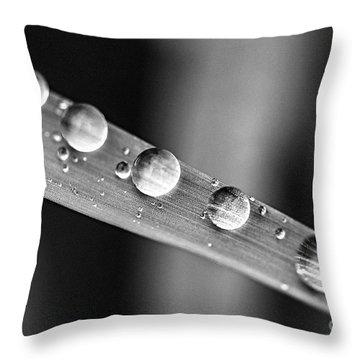 Raindrops On Grass Blade Throw Pillow by Elena Elisseeva