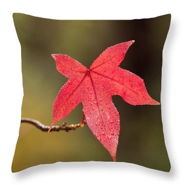Raindrops On Red Fall Leaf Throw Pillow by Michelle Wrighton