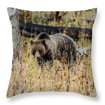 Throw Pillow featuring the photograph Rainy Day Grizzly Sow by Yeates Photography