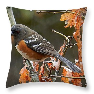 Throw Pillow featuring the photograph Rainy Spotted Towhee by Julia Hassett