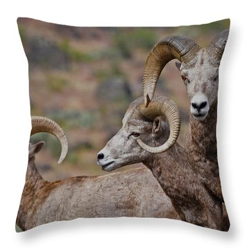 Rams In Three Throw Pillow