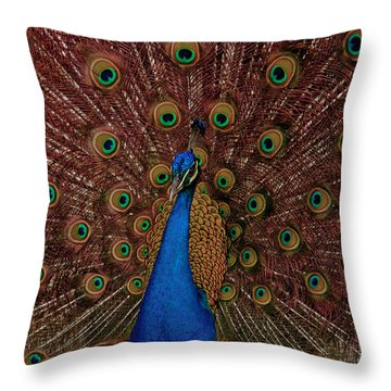 Throw Pillow featuring the photograph Rare Pink Tail Peacock by Eti Reid