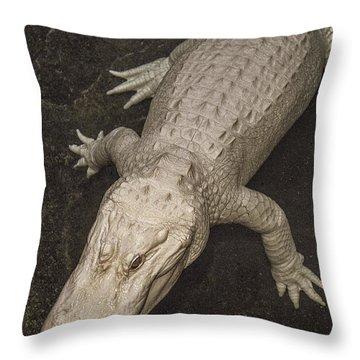 Rare White Alligator Throw Pillow by Garry Gay