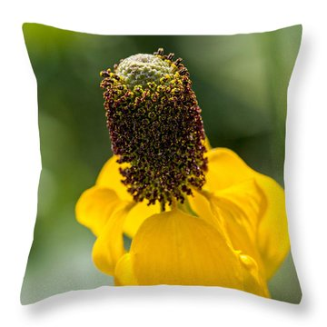 Ratibida Columnifera Throw Pillow