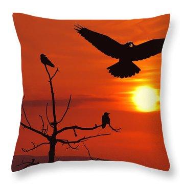 Raven Maniac Throw Pillow by Ron Day