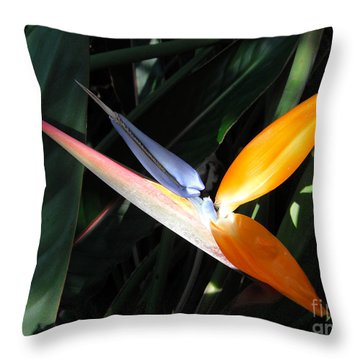Throw Pillow featuring the photograph Ray Of Light by David Lawson